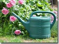 Wenn der Kompost zu trocken ist, muss gewässert werden