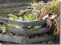 Kompost wirkt