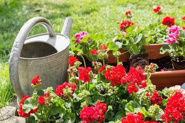 Blumenkästen mit Komposterde